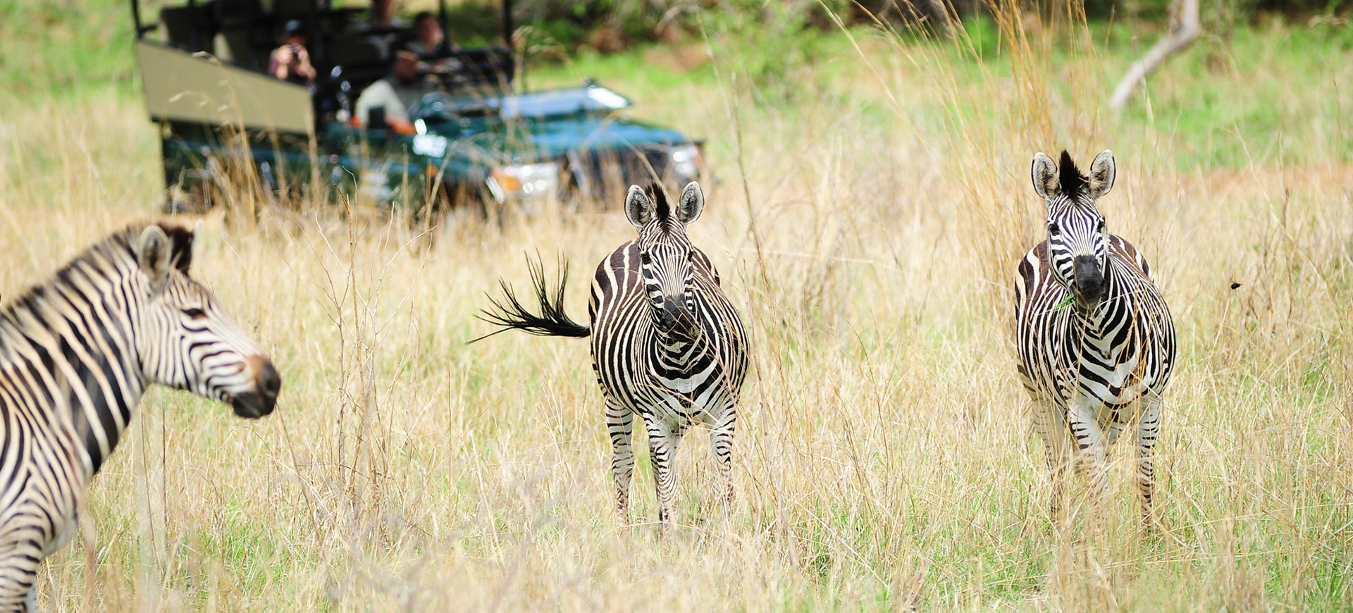 Game Drive Safari Victoria Falls Conference